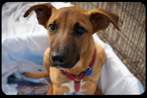 Are You Pro-Dog Daniel C Griliopouos or Bullcity Dogs