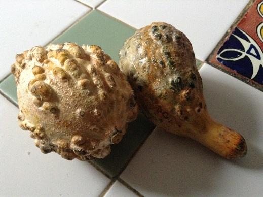 food blog decorative gourd season no more