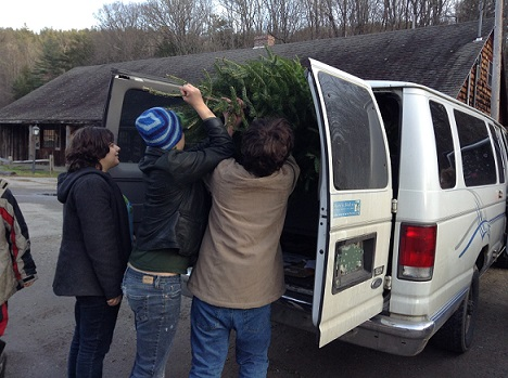 tree into van