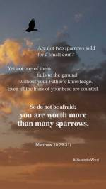 Matthew 10 29-31 (1)