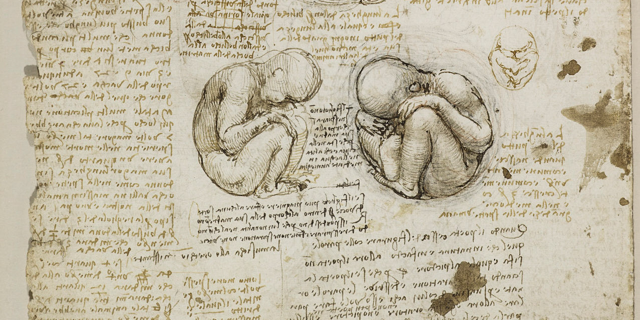 Recto: Studies of the foetus in the womb, and the external genit
