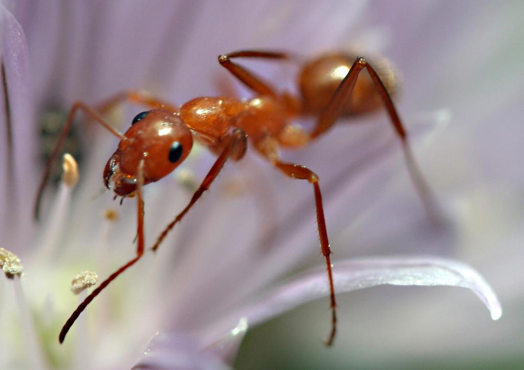 web-ants-answer-antibiotic-problem-samantha-henneke-flicker-cc