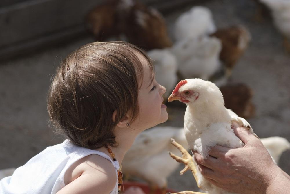 web-dont-kiss-chickens-stupid-elena-kouptsova-vasic-shutterstock_41153206