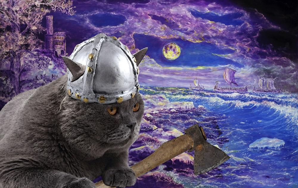 web-viking-cat-alex-coan-shutterstock_295584185