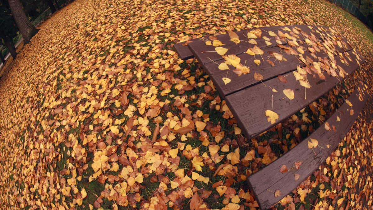 web-autumn-bench-leaves-fisheye-ian-sane-cc