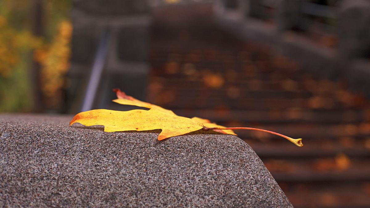 web-autumn-leaf-rock-ian-sane-cc