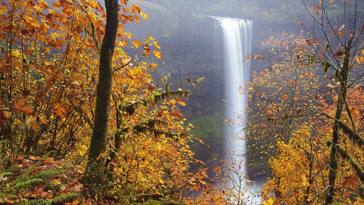 web-autumn-waterfall-leaves-forest-ian-sane-cc