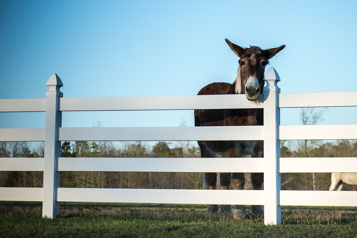 web-hanceville-shrine-donkey-jeffrey-bruno-for-ewtn