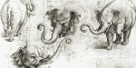 ELEPHANT HANNO