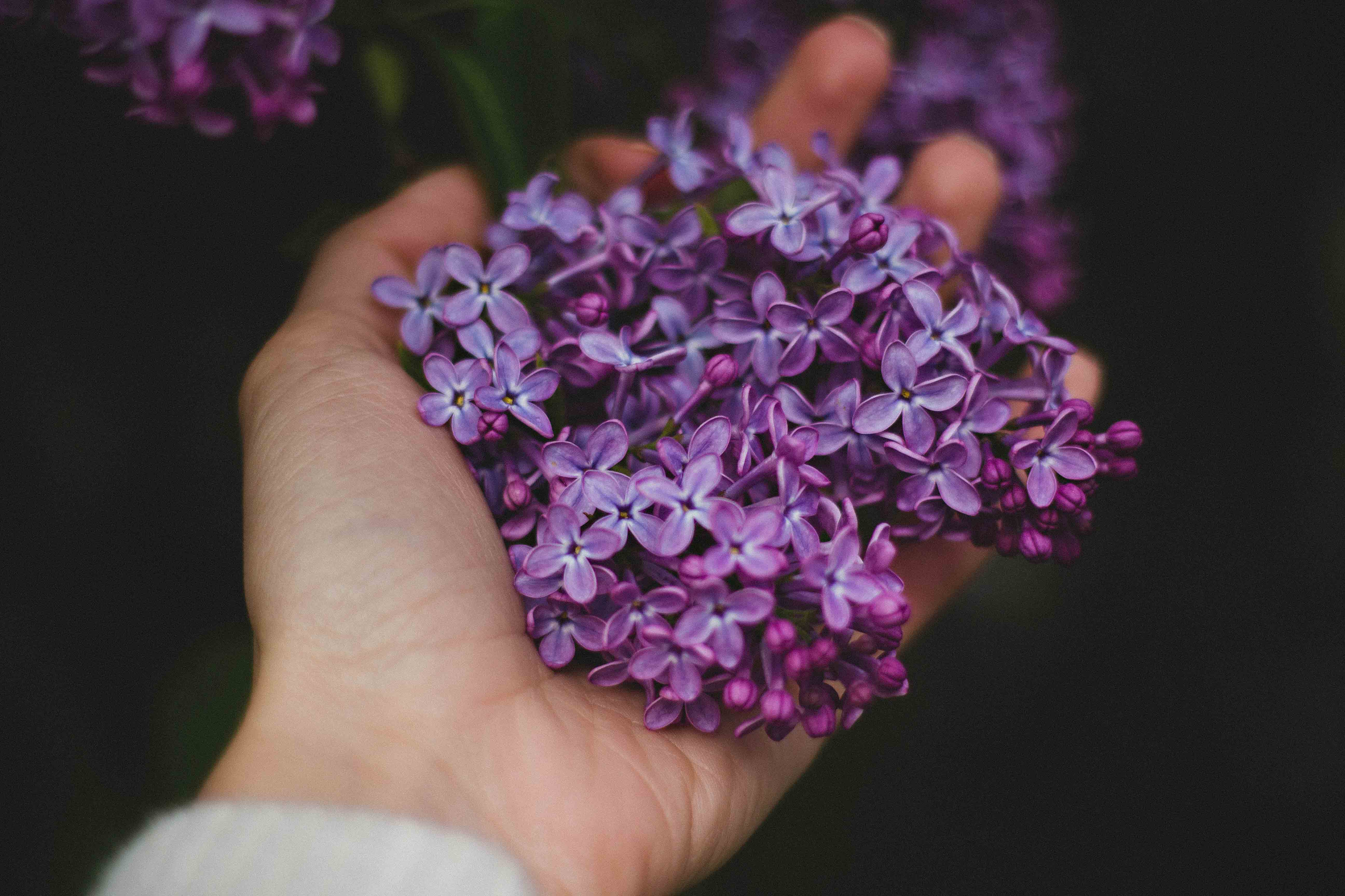 HAND HOLDING LILACS