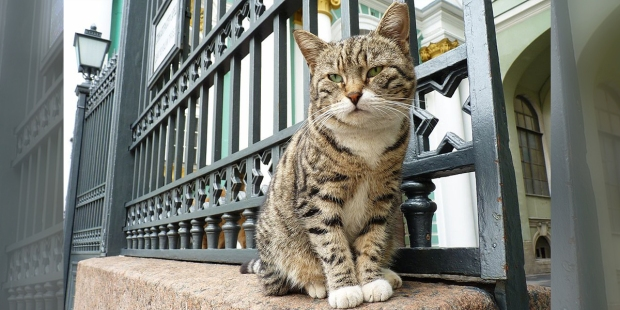 HERMITAGE CAT