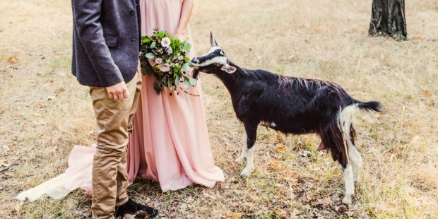 GOAT,BRIDE AND GROOM,FLOWERS