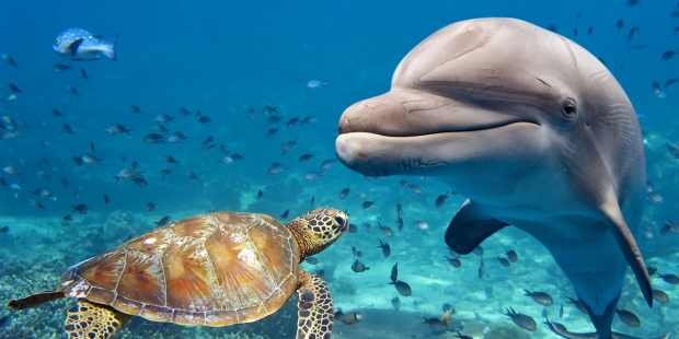 DOLPHIN AND TURTLE UNDERWATER