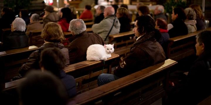 CATHOLIC CAT