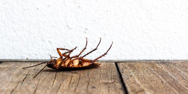 DEAD COCKROACH ON TABLE