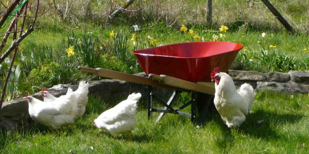 WHAT DEPENDS UPON A RED WHEELBARROW,WILLIAM CARLOS WILLIAMS