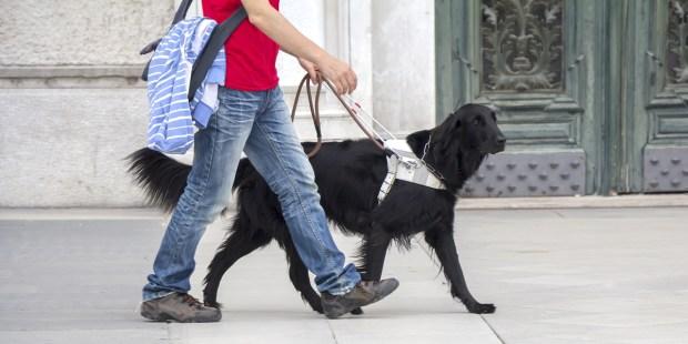 SERVICE DOG,GUIDE DOG