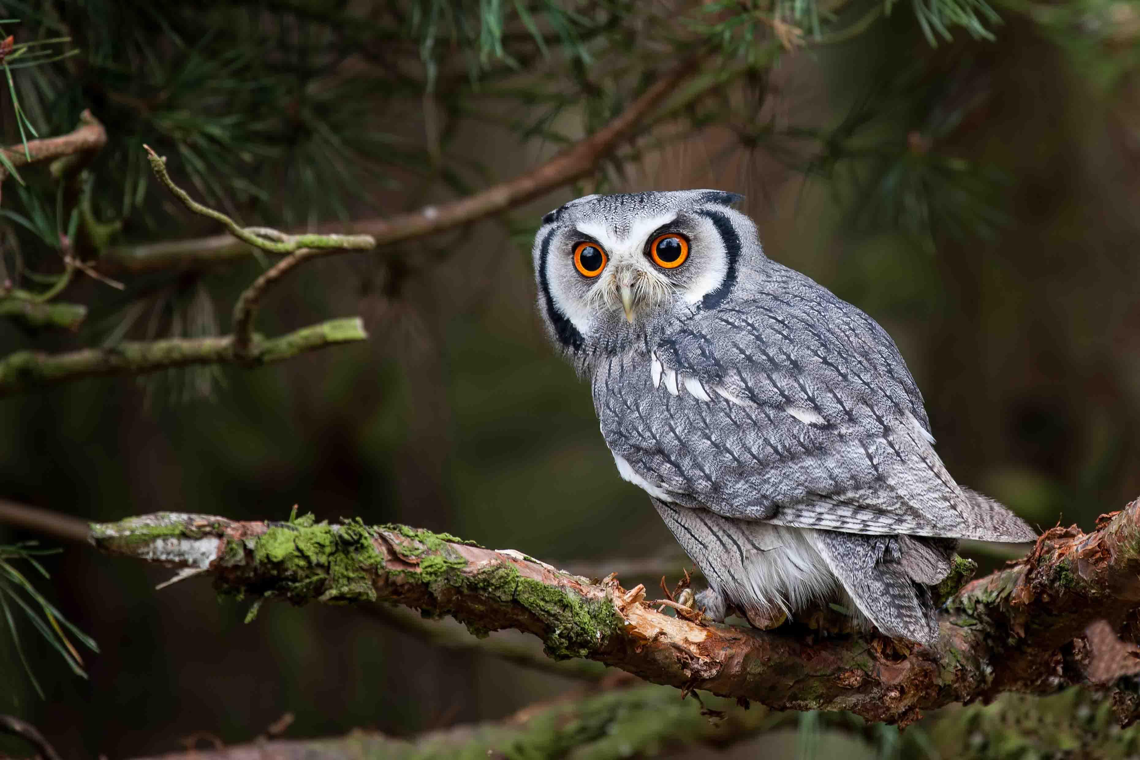 OWL,CHRISTIAN SYMBOLISM
