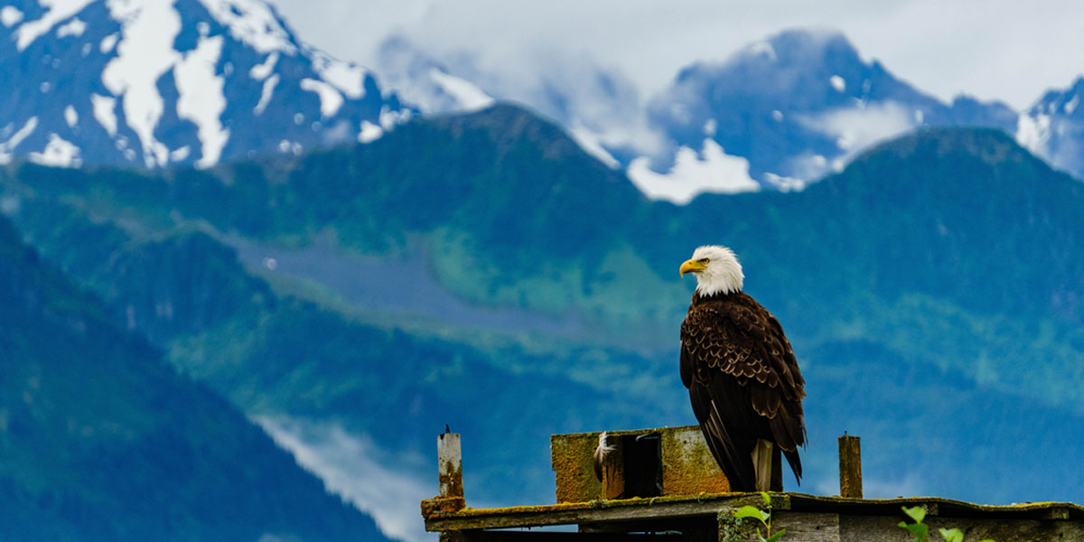 BALD EAGLE,MOUNTAINS