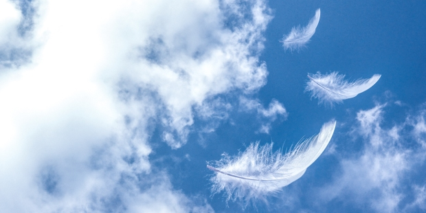 FEATHERS IN SKY