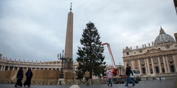 Christmas tree St Peter