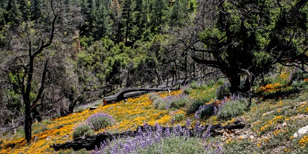 WILD FLOWERS ON A MOUNTAIN