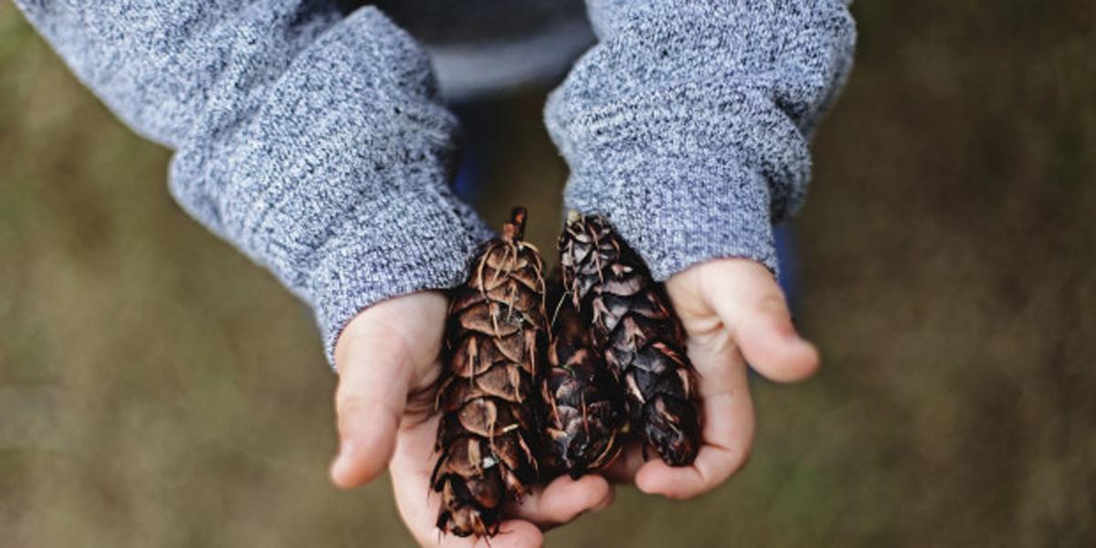 Child Holding Pinecones
