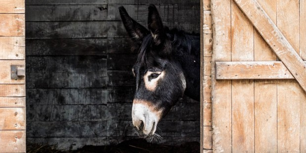DONKEY AT STABLE DOOR