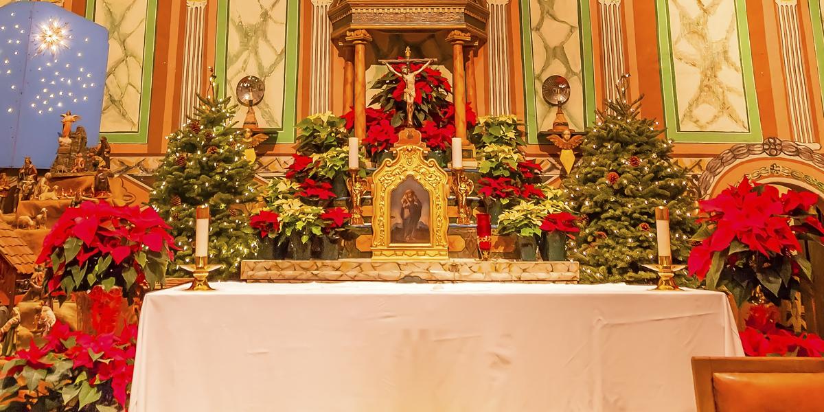 POINSETTIAS,CHRISTMAS
