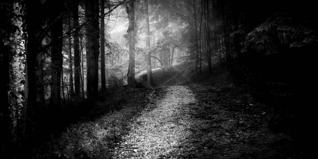 PATH IN THE WOODS