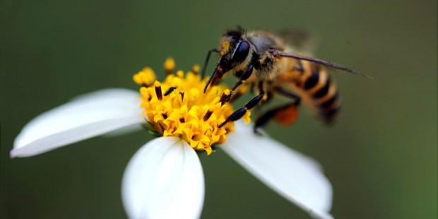 BEE,FLOWER