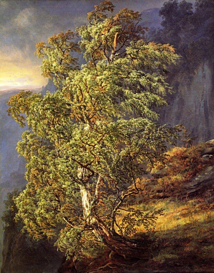 DAHL BIRCH TREE