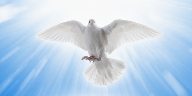 HOLY SPIRIT,DOVE