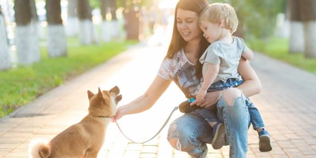 MOM,SON,DOG