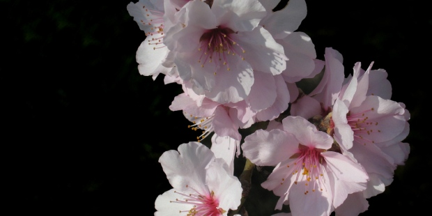 BLOSSOM,FLOWER