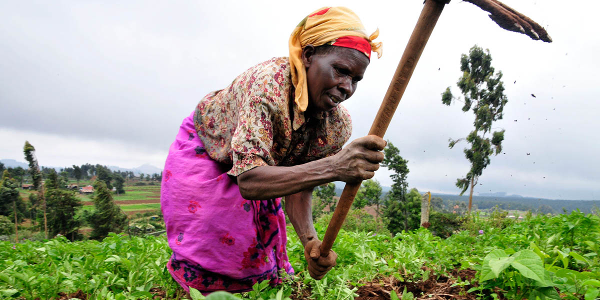 KENYA,FARMER