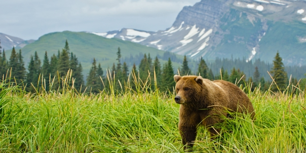 BEAR,MOUNTAIN