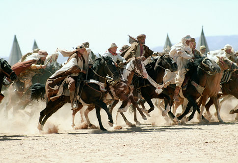 HIDALGO,HORSES