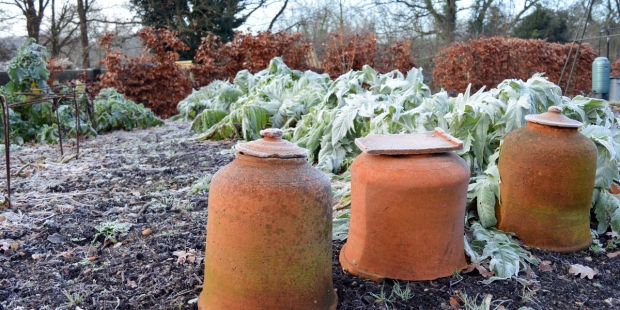 FROSTED GARDEN
