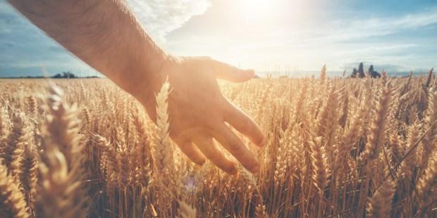 HAND MAN FIELD