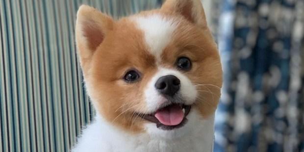 MARK WAHLBERG'S DOG CHAMP